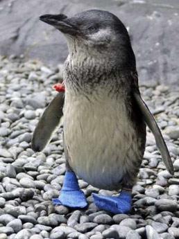 cute penguin photo