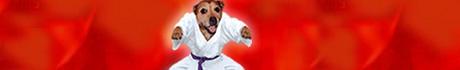 dog judo!