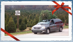 best Christmas tree farm in Chicago area