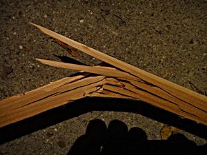 breaking cedar