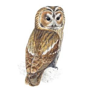 Al Owl?