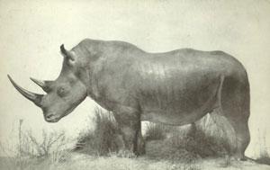 nice rhino. nice, nice rhino